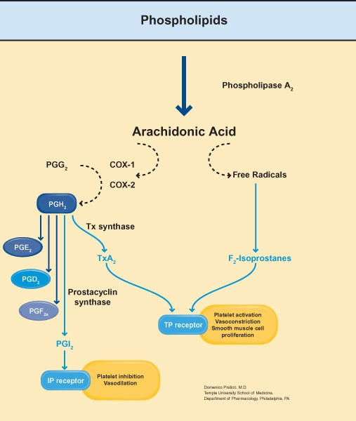 steroid role in body