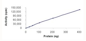 Functional Studies - CDK9/CyclinK protein (Active) (ab70320)