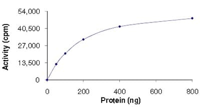 Functional Studies - PDK3 protein (Active) (ab125606)
