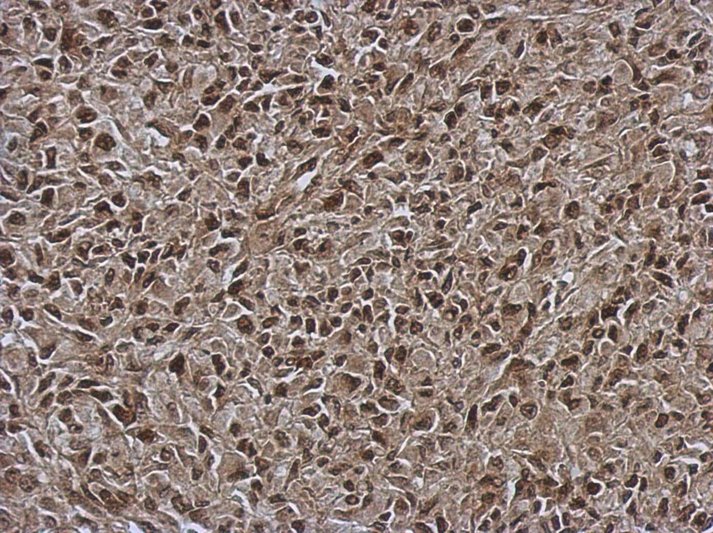 Immunohistochemistry (Formalin/PFA-fixed paraffin-embedded sections) - Anti-OSBPL9 antibody (ab127746)