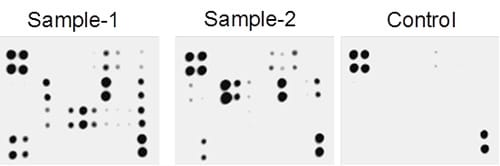 Multiplex Protein Detection - Rat Cytokine Antibody Array - Membrane (34 Targets) (ab133992)
