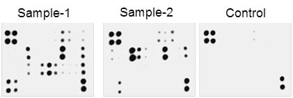Multiplex Protein Detection - Mouse Angiogenesis Antibody Array - Membrane (24 Targets) (ab139697)