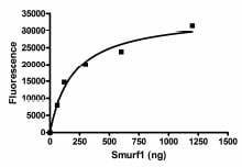 Functional Studies - SMURF1  protein (Active) (ab95928)