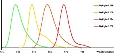 DyLight® - Donkey anti-Sheep IgG H&L (DyLight® 488) secondary antibody (ab96939)