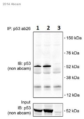 Immunoprecipitation - Anti-p53 antibody [PAb 240] (ab26)