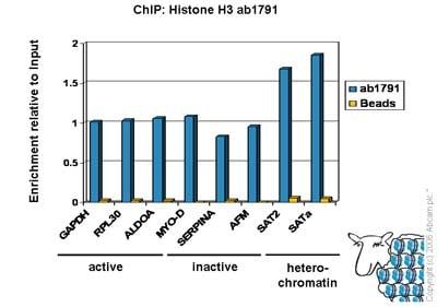 ChIP - ChIP Kit (ab500)