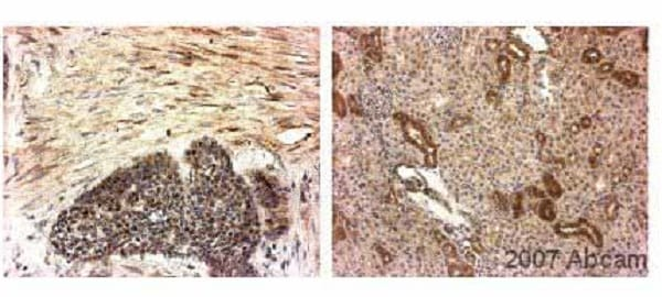 Immunohistochemistry (Formalin/PFA-fixed paraffin-embedded sections) - Anti-COX1 / Cyclooxygenase 1 antibody [5F6/F4] (ab695)