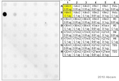 Dot Blot - Human Histone H3 (mono methyl K4) peptide (ab1340)
