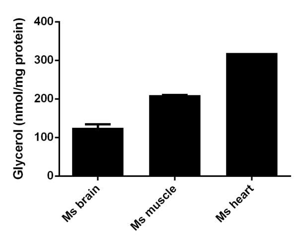 Functional Studies - Adipogenesis Detection Kit (ab102513) - Colourimetric
