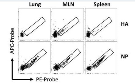 Conjugation of recombinant influenza A H1N1 NP protein with PE or APC fluorochromes using ab102918