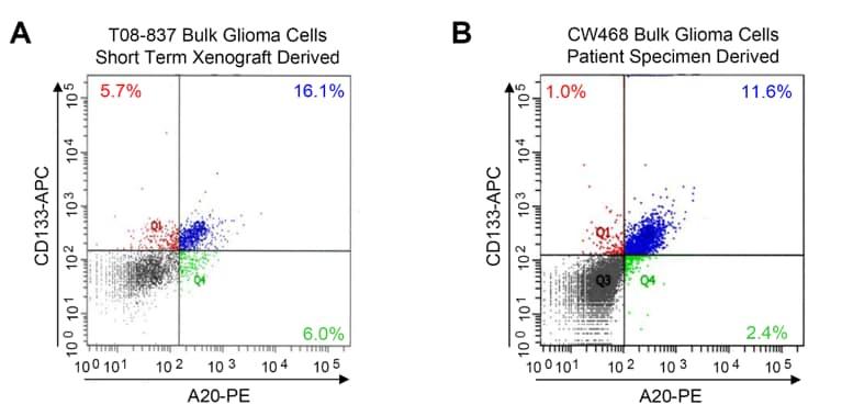 PE / R-Phycoerythrin Conjugation Kit - Lightning-Link® labeling A20 antibody for FACS