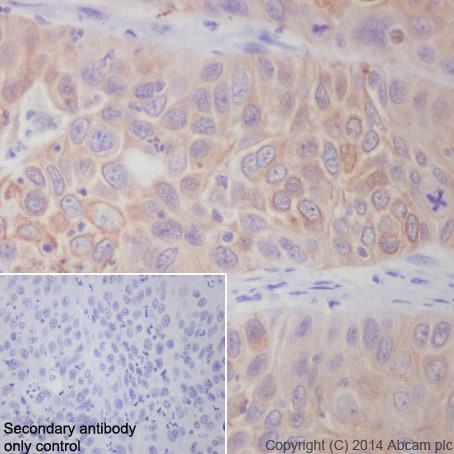 Immunohistochemistry (Formalin/PFA-fixed paraffin-embedded sections) - Anti-APG5L/ATG5 antibody [EPR1755(2)] (ab108327)