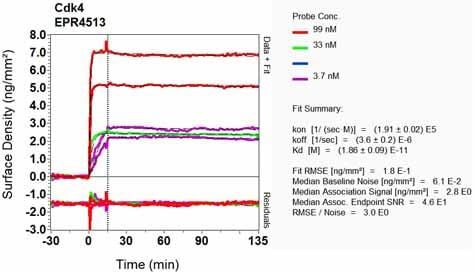 OI-RD Scanning - Anti-Cdk4 antibody [EPR4513-32-7] (ab108357)