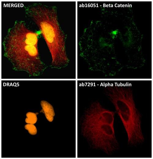 Immunocytochemistry/ Immunofluorescence - DRAQ5™ (ab108410)