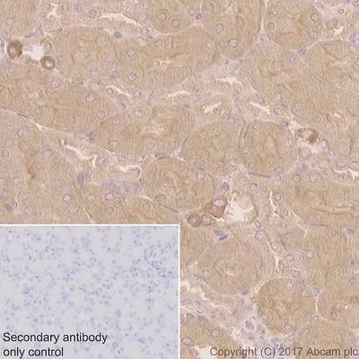 Immunohistochemistry (Formalin/PFA-fixed paraffin-embedded sections) - Anti-COX1 / Cyclooxygenase 1 antibody [EPR5866] (ab109025)