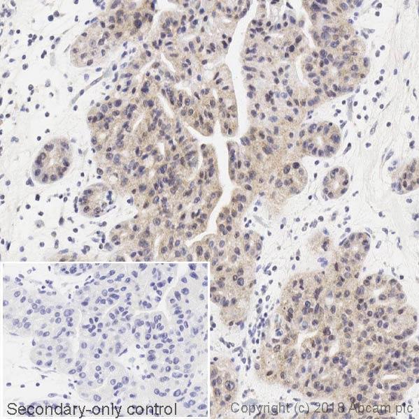 Immunohistochemistry (Formalin/PFA-fixed paraffin-embedded sections) - Anti-DDIT3 antibody [9C8] (ab11419)