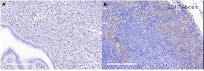 Immunohistochemistry (Formalin/PFA-fixed paraffin-embedded sections) - Anti-F4/80 antibody [SP115] (ab111101)