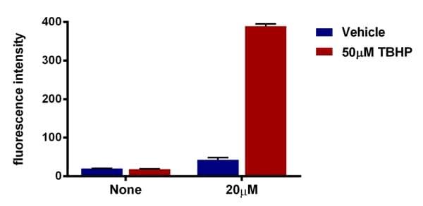 Functional Studies - DCFDA - Cellular Reactive Oxygen Species Detection Assay Kit  (ab113851)