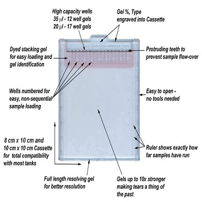 SDS-PAGE - PrecastGel SDS-PAGE 12% (10x10cm,12well) (ab119203)