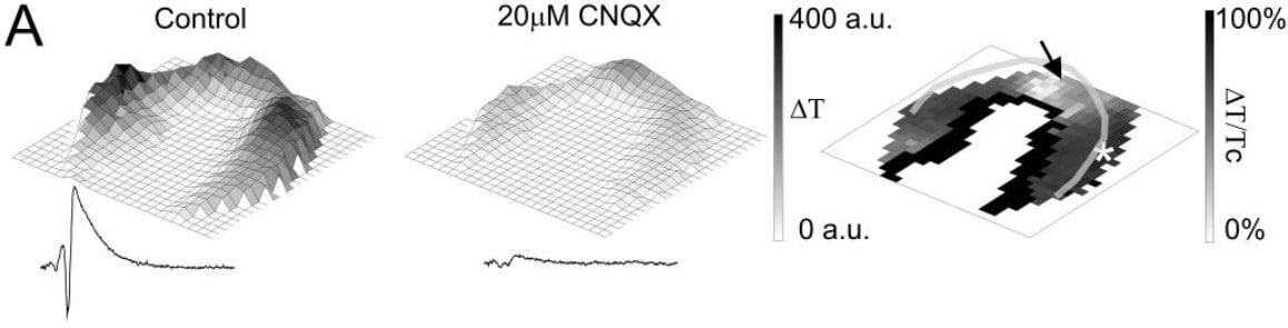 Other - CNQX, AMPA / kainate antagonist (ab120017)