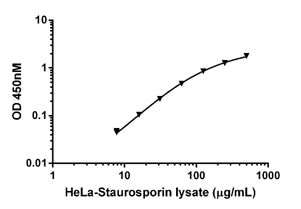 Functional Studies - Staurosporine, Protein kinase inhibitor (ab120056)