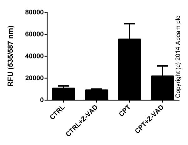 Functional Studies - Camptothecin, DNA topoisomerase inhibitor (ab120115)