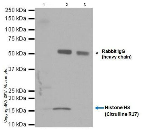 Immunoprecipitation - Ionomycin Ca2+ Salt, Ca<sup>2+</sup> ionophore (ab120116)