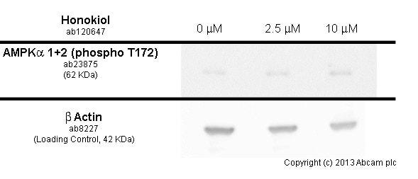 Functional Studies - Honokiol, anti-inflammatory and chemotherapeutic agent (ab120647)