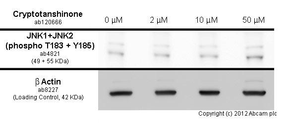 Functional Studies - Cryptotanshinone, STAT3 inhibitor (ab120666)