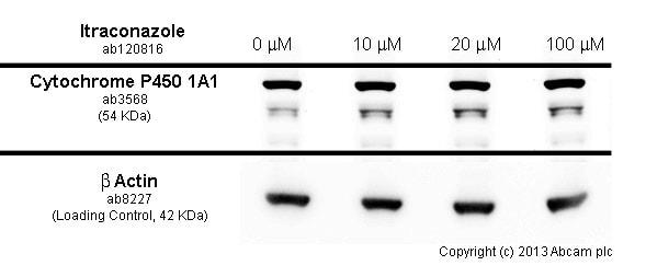 Functional Studies - Itraconazole, Cytochrome p450 inhibitor (ab120816)