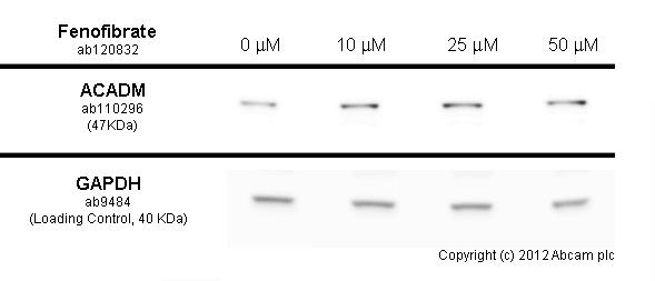 Functional Studies - Fenofibrate, PPAR-alpha agonist (ab120832)