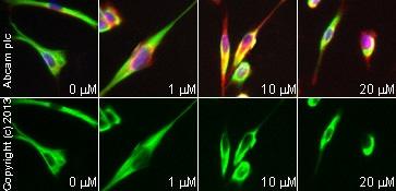 Functional Studies - Prostaglandin J2, PGD<sub>2</sub> analog (ab120913)