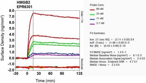 OI-RD Scanning - Anti-HMGB2 antibody [EPR6301] (ab124670)