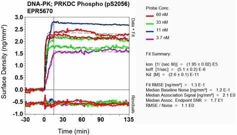 Other - Anti-DNA PKcs (phospho S2056) antibody [EPR5670] (ab124918)