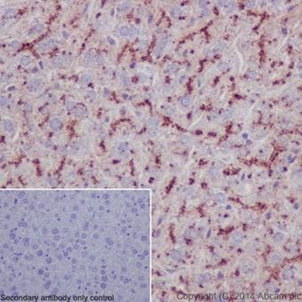 Immunohistochemistry (Formalin/PFA-fixed paraffin-embedded sections) - Anti-LAMP2A antibody [EPR4207(2)] - Lysosome Marker (ab125068)