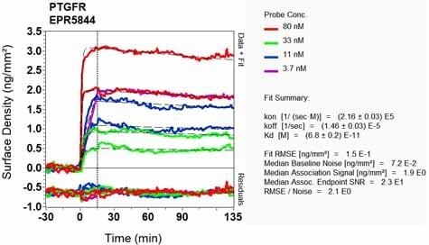Other - Anti-Prostaglandin F2 alpha Receptor/PTGFR antibody [EPR5844] (ab126709)
