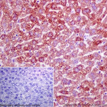 Immunohistochemistry (Formalin/PFA-fixed paraffin-embedded sections) - Anti-FMO3 antibody [EPR6968] (ab126711)