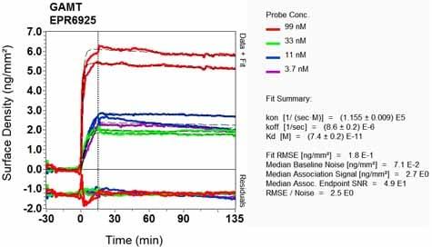 Other - Anti-GAMT antibody [EPR6925] (ab126736)