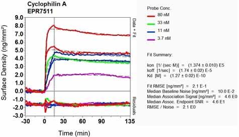 OI-RD Scanning - Anti-Cyclophilin A antibody [EPR7511] (ab126738)