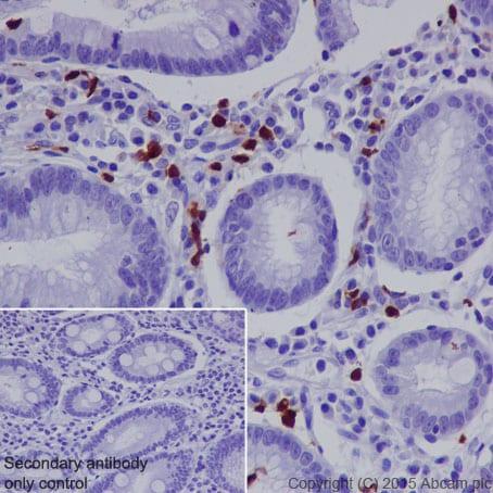 Immunohistochemistry (Formalin/PFA-fixed paraffin-embedded sections) - Anti-CD163L1 antibody [EPR6539] (ab126756)