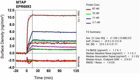 Other - Anti-MTAP antibody [EPR6893] (ab126770)