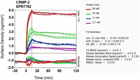 OI-RD Scanning - Anti-CRMP2 antibody [EPR7792] (ab129082)