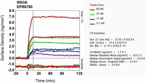 OI-RD Scanning - Anti-mSin3A antibody [EPR6780] (ab129087)
