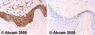 Immunohistochemistry (Formalin/PFA-fixed paraffin-embedded sections) - Anti-Cytochrome C antibody [7H8.2C12] (ab13575)