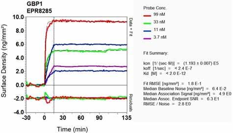 OI-RD Scanning - Anti-GBP1 antibody [EPR8285] (ab131255)