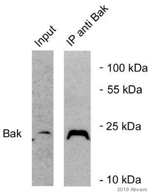 Immunoprecipitation - VeriBlot for IP Detection Reagent (HRP) (ab131366)