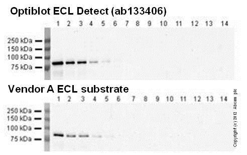 Western blot comparison 1/25000 anti-Transferrin primary antibody, 1/50000 secondary antibody, 20 second exposure