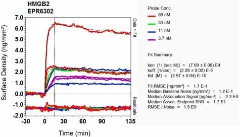 OI-RD Scanning - Anti-HMGB2 antibody [EPR6302] (ab133540)