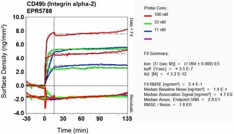 Other - Anti-Integrin alpha 2 antibody [EPR5788] (ab133557)