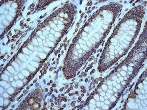 Immunohistochemistry (Formalin/PFA-fixed paraffin-embedded sections) - Anti-Lamin B1 antibody [EPR8985(B)] (ab133741)